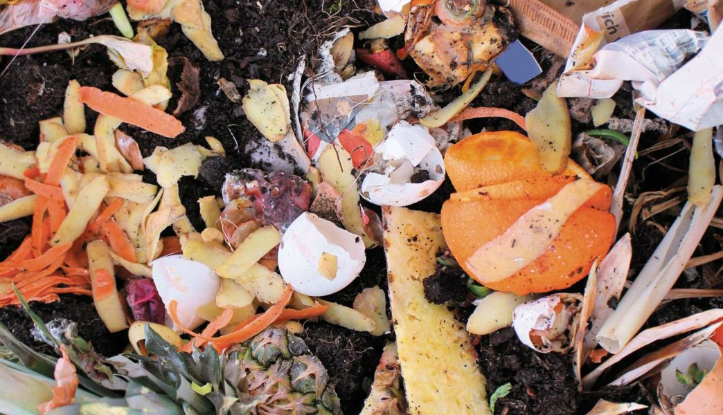 Food Waste On Campus: Small Scale Solutions to a Large Scale Problem